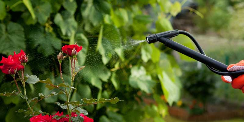 Best Garden Sprayer Reviews Buyer's Guide