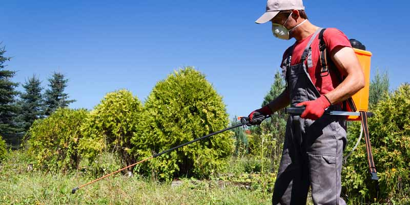 How to choose the Best Garden Sprayer
